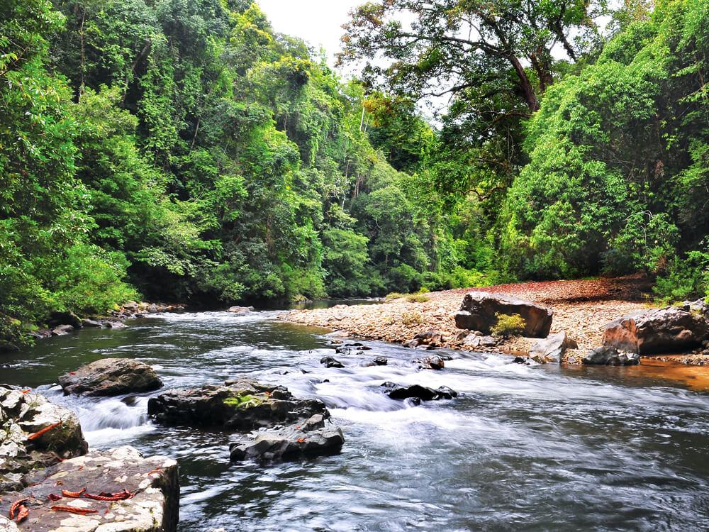 Honeymoon spots in Malaysia – Taman Negara
