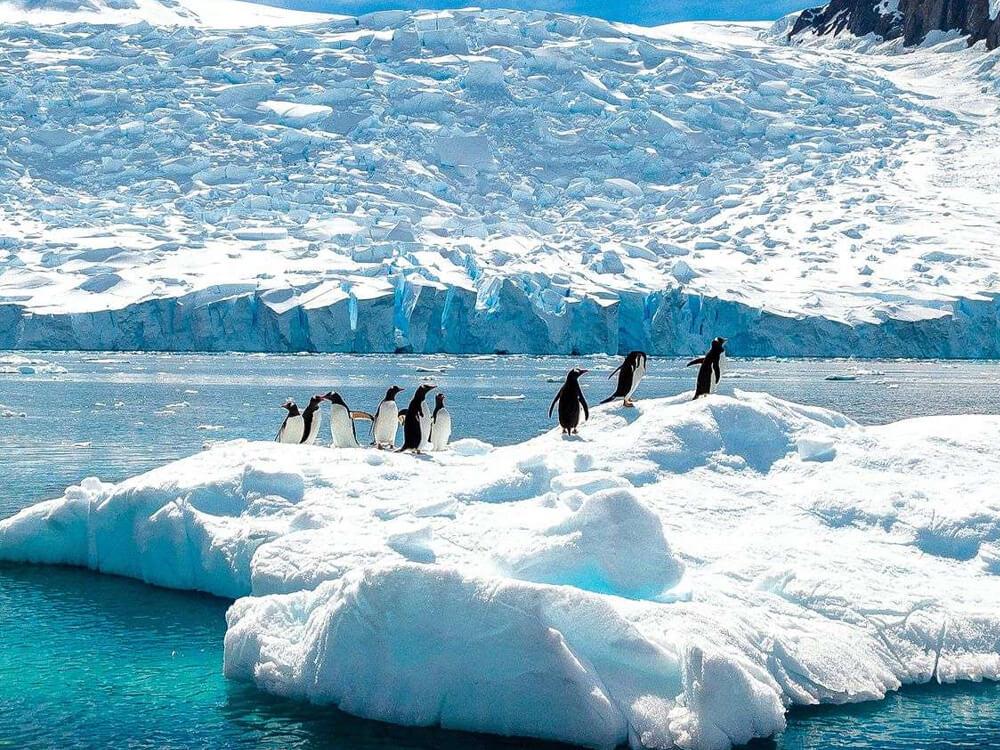antarctic patagonia