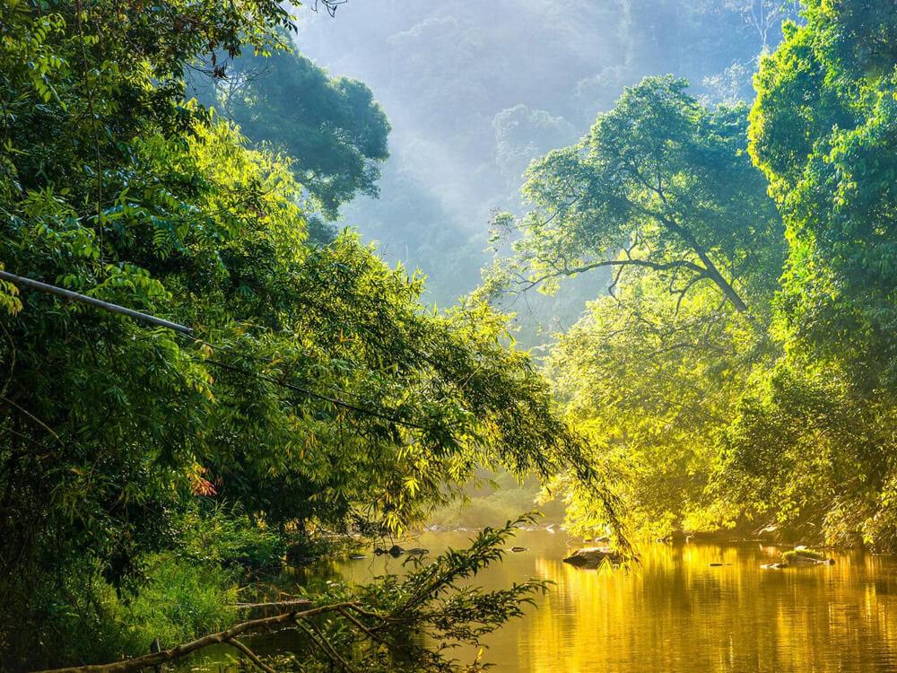 brazilion amazon