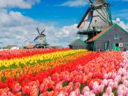 The World's Most Beautiful Flower Garden!