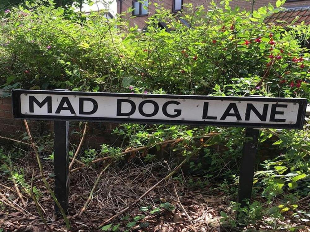 Mad Dog Lane