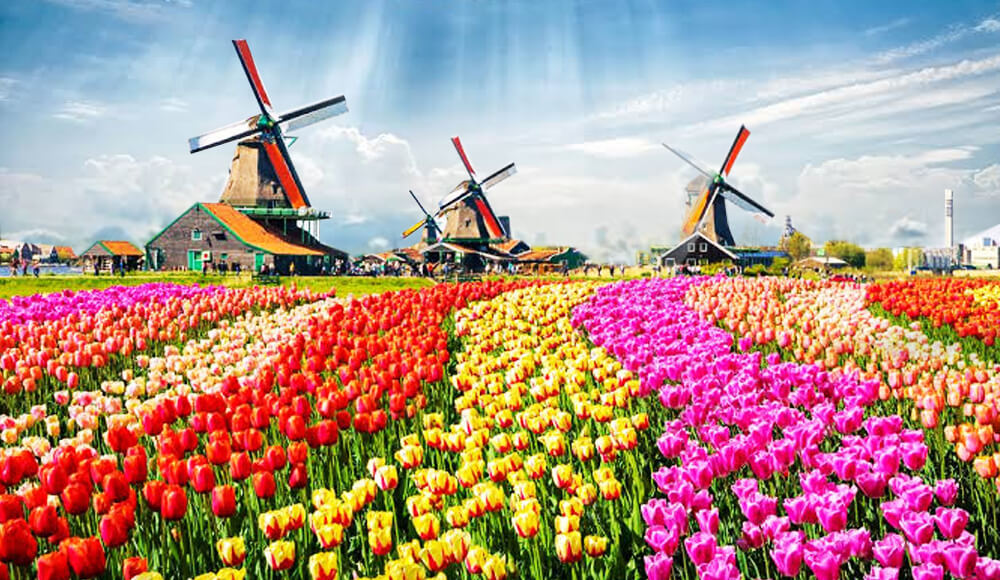 Maximize Your Chances Of Getting Schengen Visit Visa During This Tulip Festival