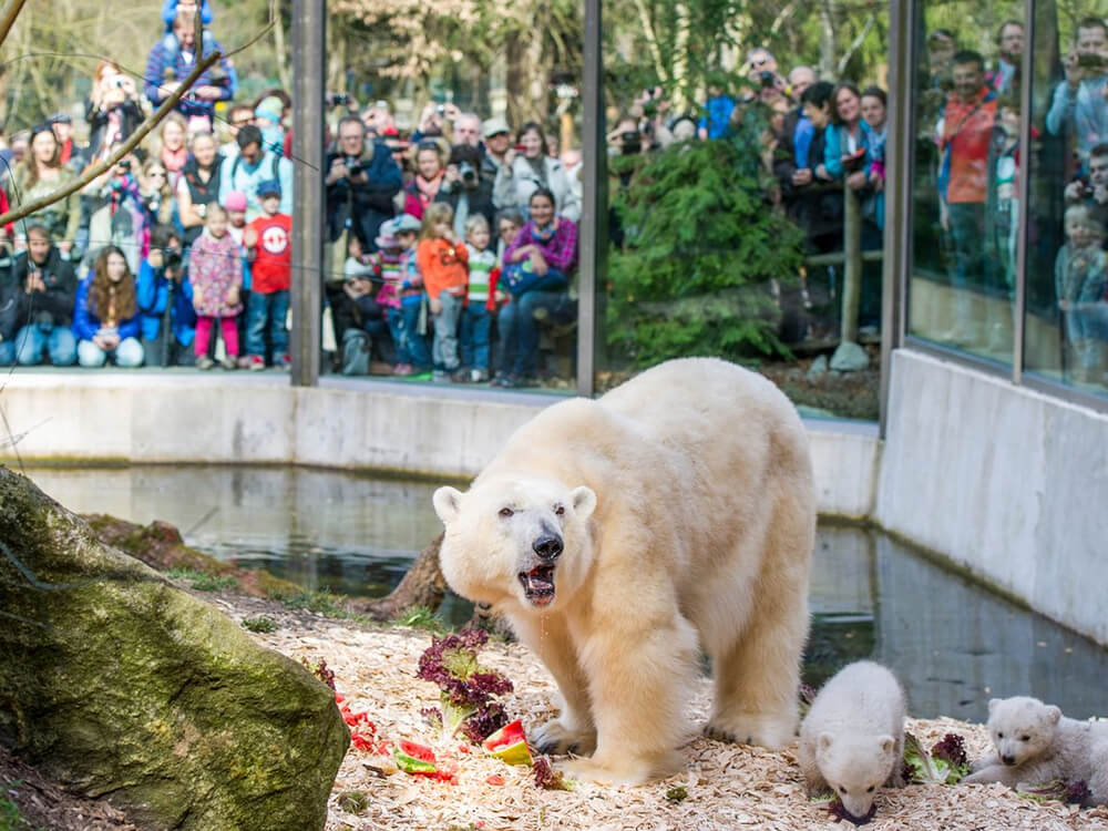 Tierpark Hellabrunn (Hellabrunn Zoo)