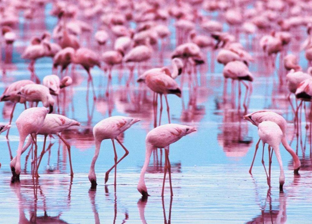 Pink Flamingos UAE